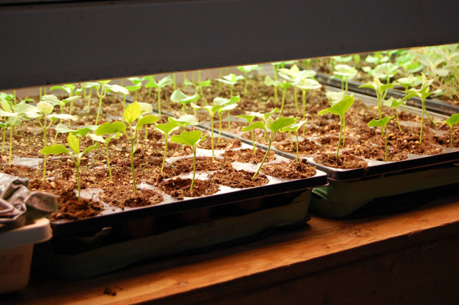 MARK CULLEN: Grow Your Own – Seed Starting Tips Image