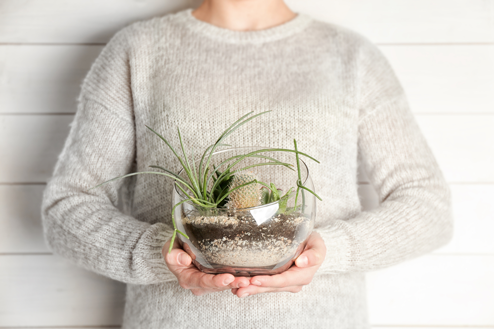 4 terrific terrarium tips for your small space Image