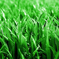 Fertilize your lawn like the pros Image