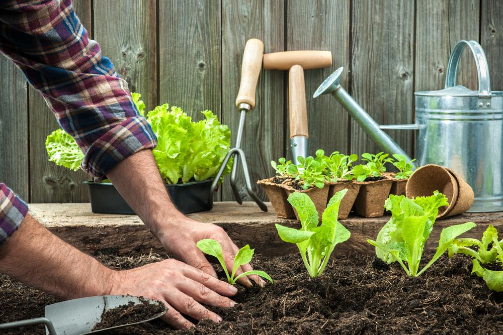 5 steps to having the best home garden ever Image