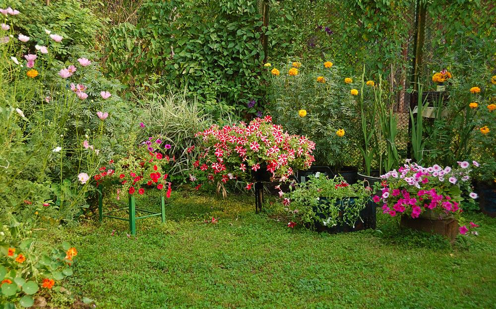 Tips to help your home garden beat the heat this summer! Image