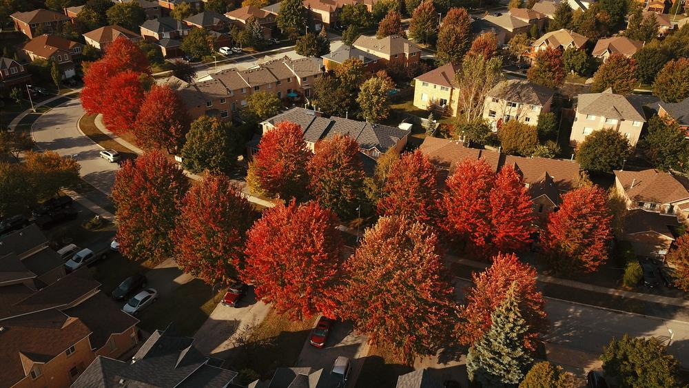 Home sales and average price drop in November Image