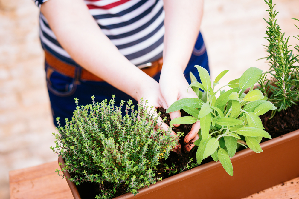Top 5 tips for gardeners with limited space Image