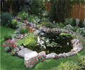 Garden Pond Tips: Bringing your pond to life Image