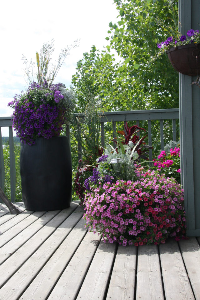 Tips for gardeners with limited space