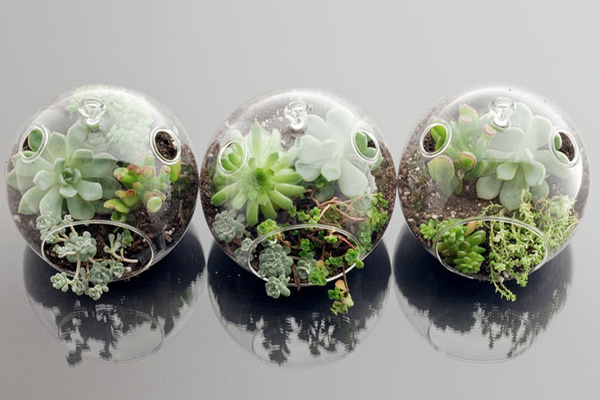 How to Build a Terrarium Image