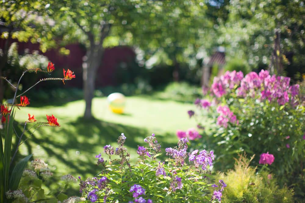 3 of the worst summer garden woes and how to overcome them Image